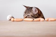 Où trouver les meilleures croquettes pour chat ?