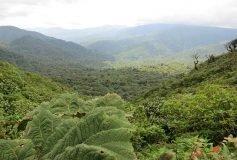 Écotourisme au Costa Rica : 2 visites incontournables à Monteverde
